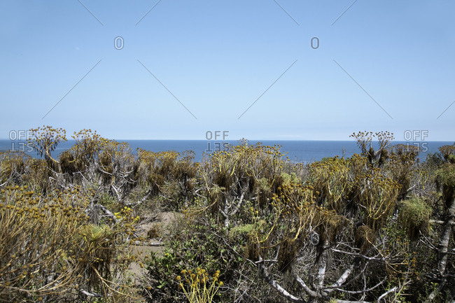 Plants on a cliff on the coast of a blue ocean