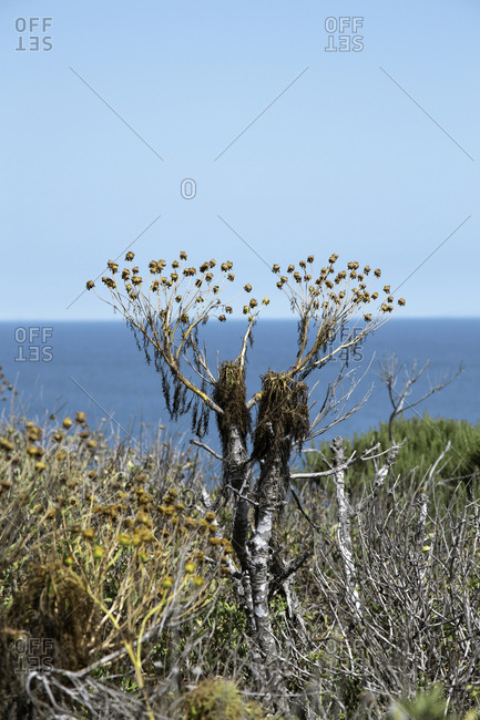 Plants on a cliff in front of blue ocean