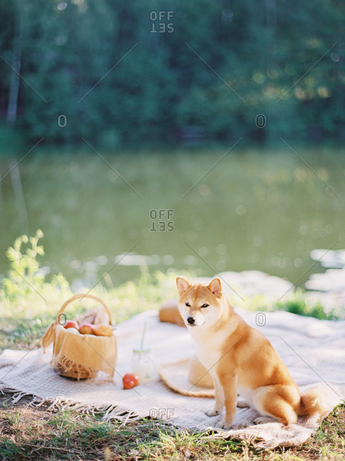 Dog sitting on picnic blanket by river
