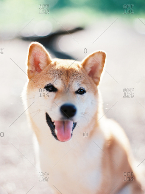 Close up of a happy furry dog outdoors