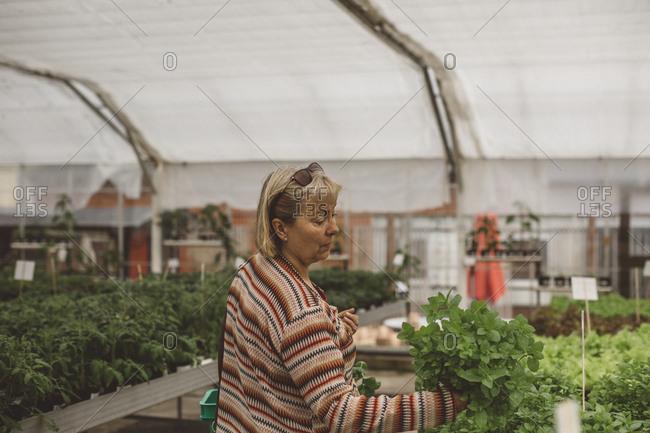 Mature woman choosing seedlings in plant nursery