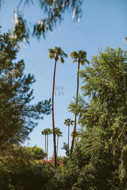 Palm trees in a lush desert