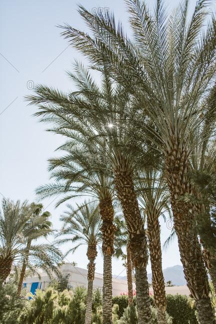 Palm springs vacation patio