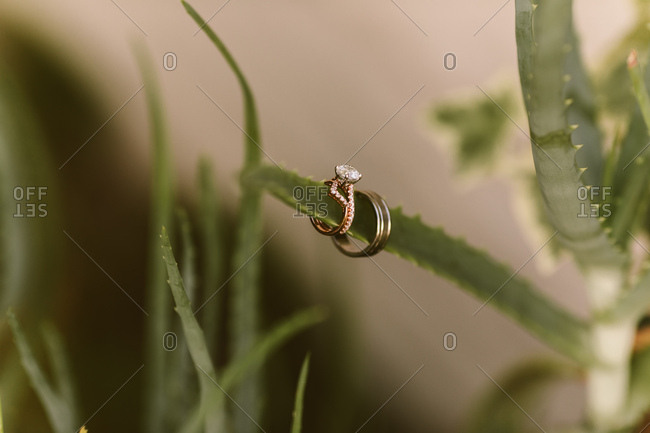 Wedding rings on a desert succulent