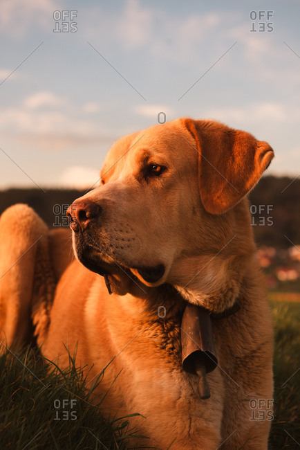 Funny domestic dog standing between meadow with green grass and blue heaven