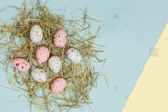 From above bright quail eggs between dry straws on blue and yellow background