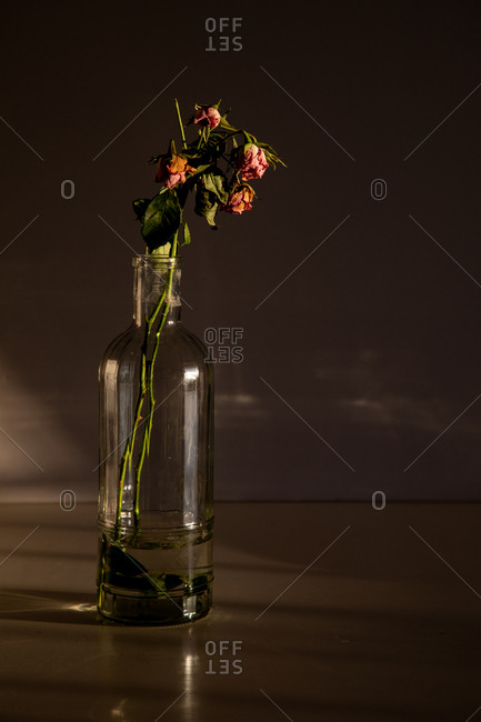 Lovely pink flowers placed in stylish glass vase on wooden tabletop on dark gray background