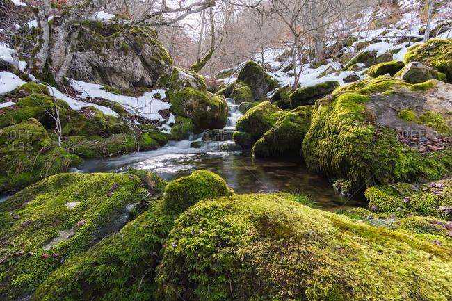 River running between stones in moss in forest