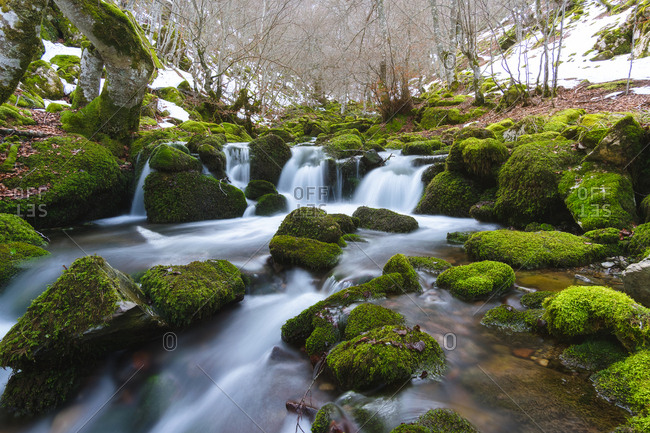 Narrow mountain river running between rocks in green moss in winter forest in Leon, Spain