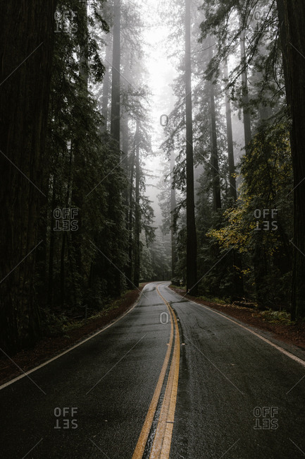 Forest surrounding winding road