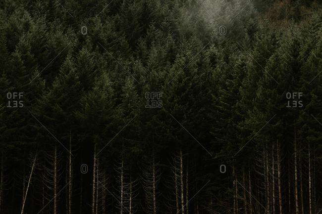 Fog above river running through dense forest