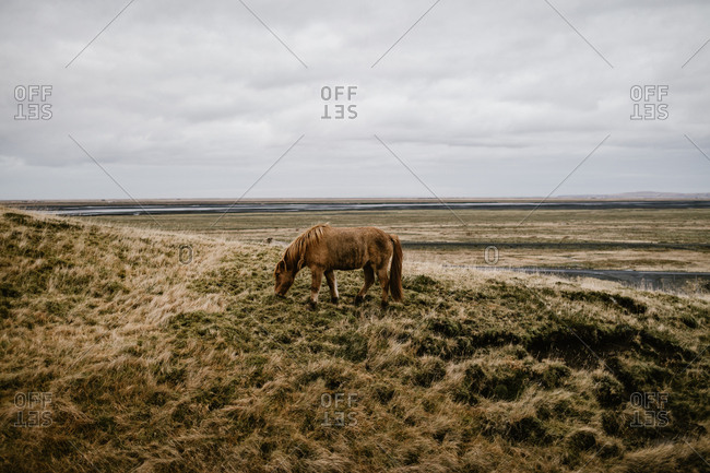 Horse grazing in the countryside