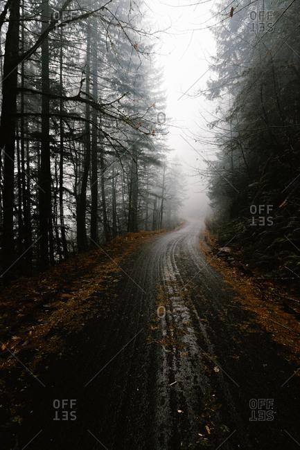 Dense fog on road leading through a forest