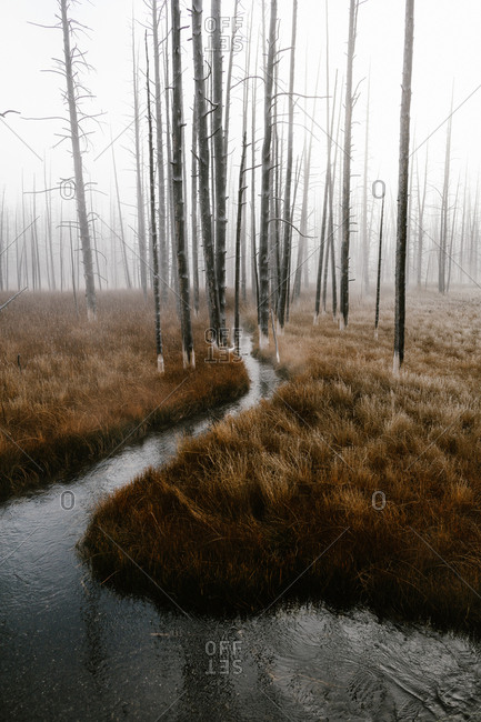 Narrow river running through foggy forest