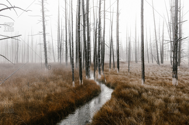 Narrow river in a foggy forest