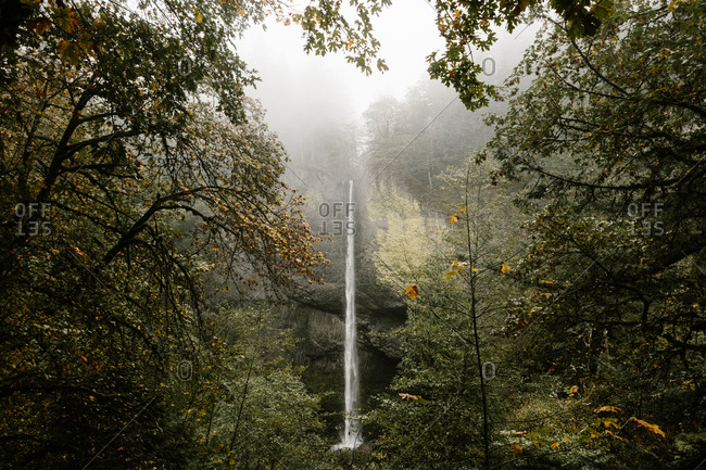 Tall waterfall seen through trees in a forest
