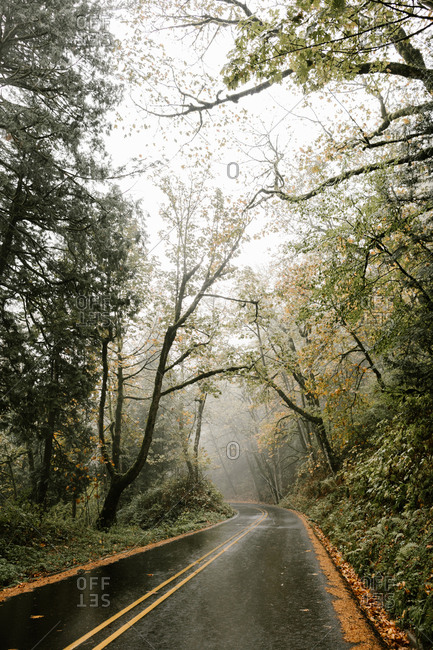 Fog over forest surrounding curving road