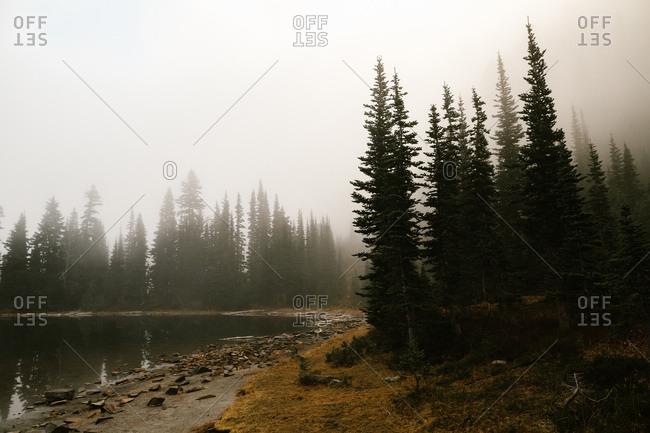 Fog above trees on lakeside