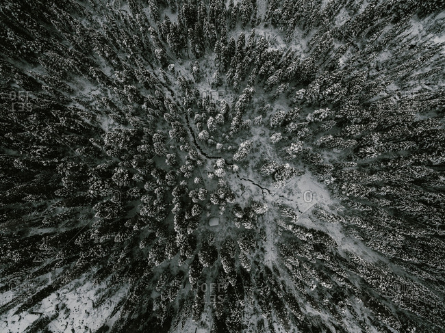 Aerial view of a dense snowy forest