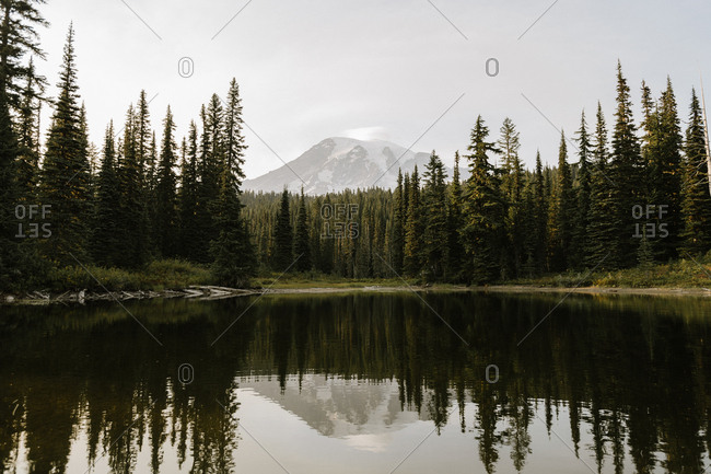 Snowy mountain peak and forest reflecting in lake