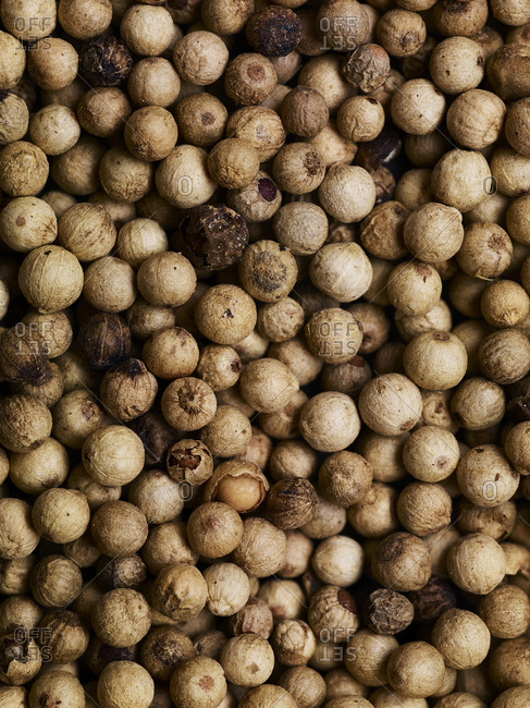 A close-up overhead view of many white peppercorns filling the frame.
