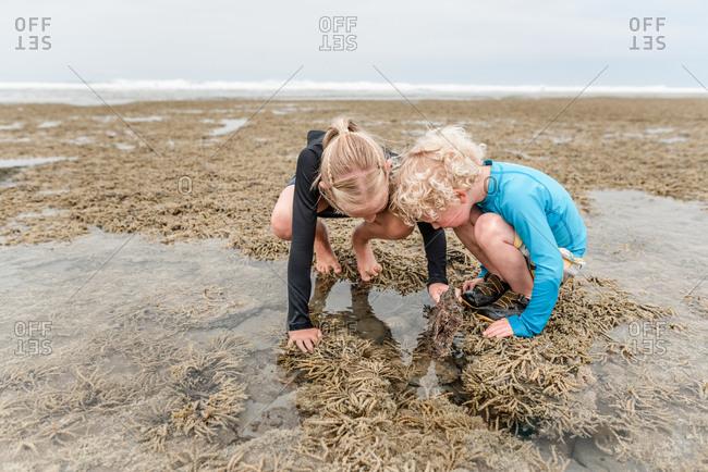 Siblings searching through tide pools at Hawke's Bay, New Zealand