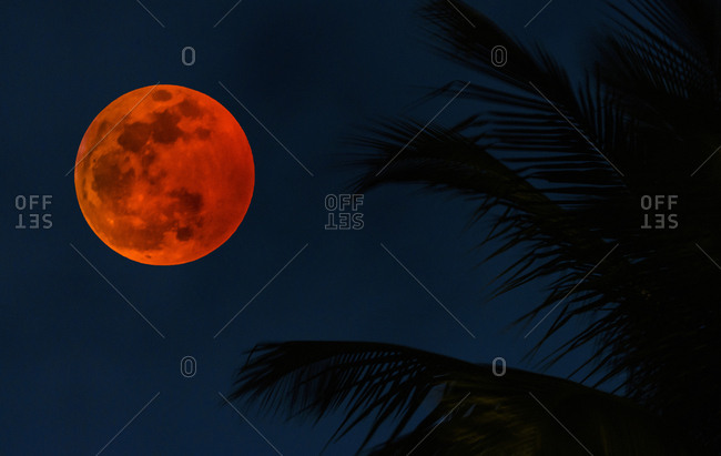 Lunar eclipse by palm tree fronds