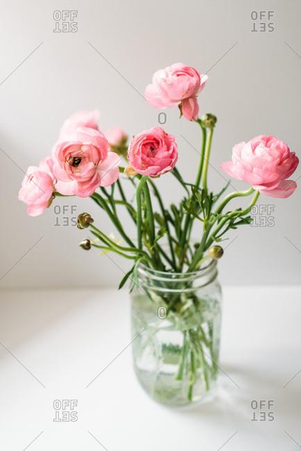 Pink ranunculus flowers in a jar