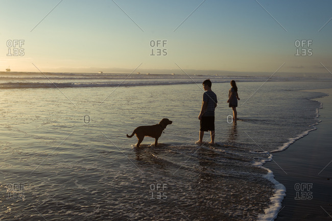 Kids and dog in the ocean tide at sunset