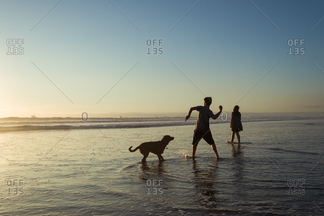 Kids and dog in the ocean tide at sunset playing fetch