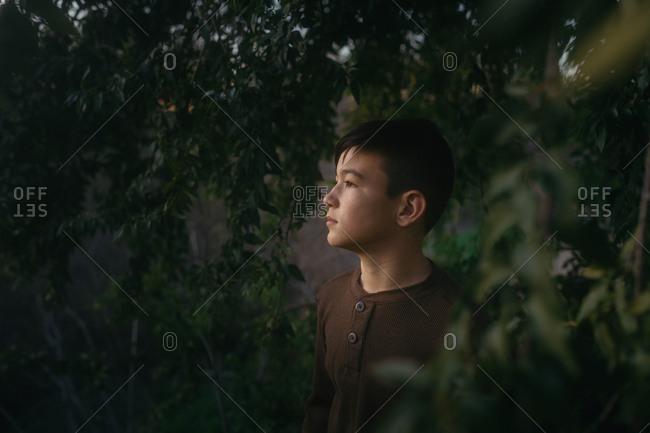Portrait of a boy watching sunset surrounded by trees