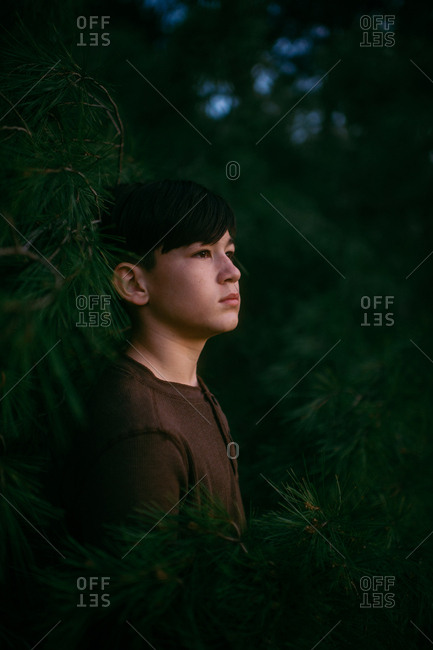 Boy watching sunset surrounded by fir trees