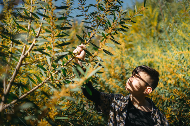 Boy holding branch of an acacia plant