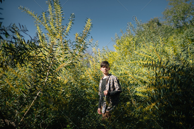 Boy surrounded by acacia plant