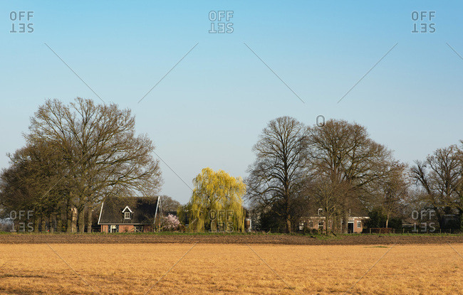 Country homes and bare trees under sunny blue sky