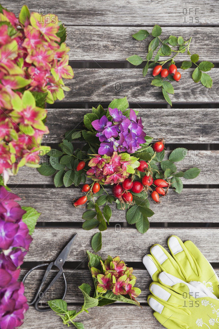 Hydrangeas and rosehips- gardening gloves and scissors on garden table