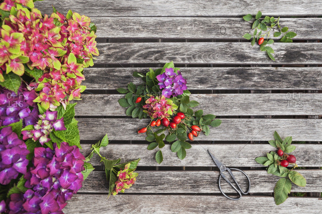 Hydrangeas- rosehips and scissors on garden table