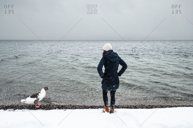 Grey goose and young woman at Lake Starnberg in winter