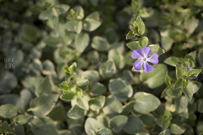 Purple flowers and green background
