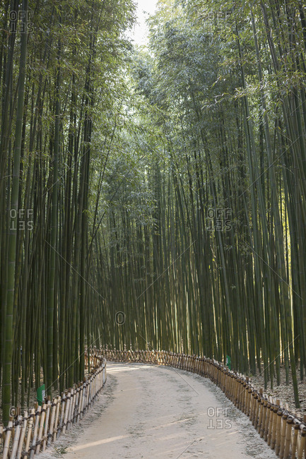 Bamboo forest and trails