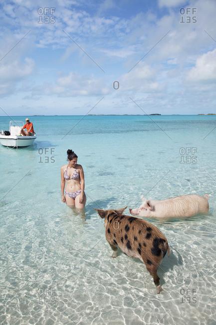 October 27, 2011: EXUMA, Bahamas. Swimming pigs at Big Major Cay.