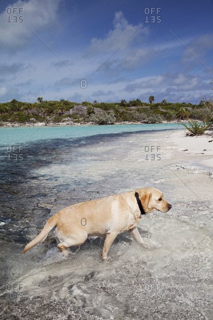 October 28, 2011: EXUMA, Bahamas. Ruby on the beach of Compass Cay.