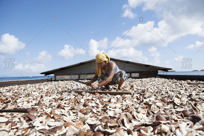 April 9, 2010: FRENCH POLYNESIA, Tahaa. Drying coconuts to make coconut oil.