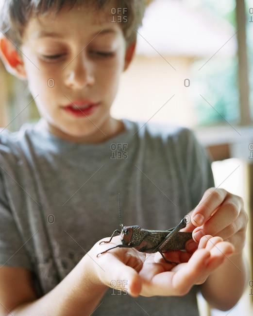 October 5, 2010: PERU, Amazon Rainforest, South America, Latin America, boy holding a grasshopper
