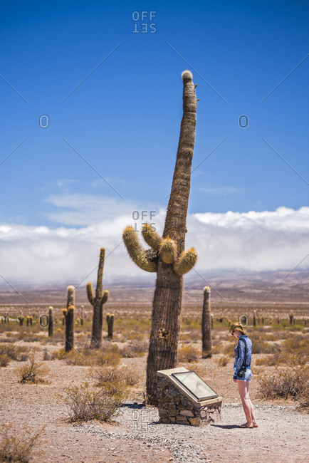 December 11, 2014: Argentina, Salta, Tourist at Cactus National Park (Parque Nacional Los Cardones), Cachi Valley, Calchaqui Valleys