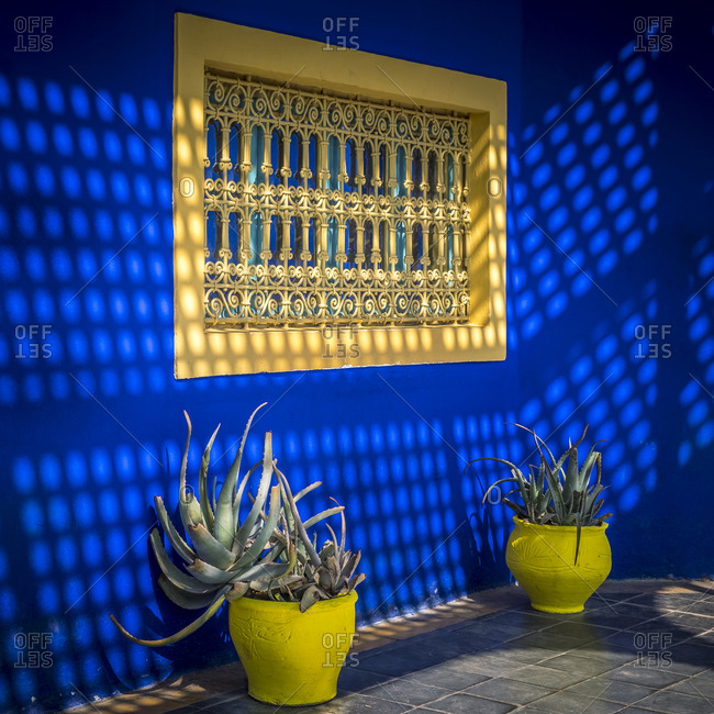 Morocco, Morocco, Marrakech, Marrakesh, Vivid colors in the Jardin Majorelle, Majorelle Gardens