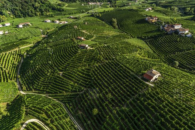 Italy, Veneto, Treviso district, Valdobbiadene, Prosecco Road, Cartizze hills