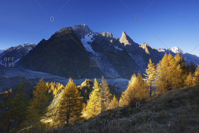 Italy, Aosta Valley, Aosta district, Courmayeur, Val Veny, Alps, Autumn larches and the Mont Blanc (Monte Bianco) Massif at sunset, along the path between Lac de Combal and Col Ch�crouit
