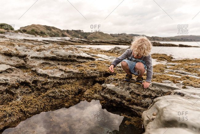Young boy exploring algae and moss on tide pools by the bay