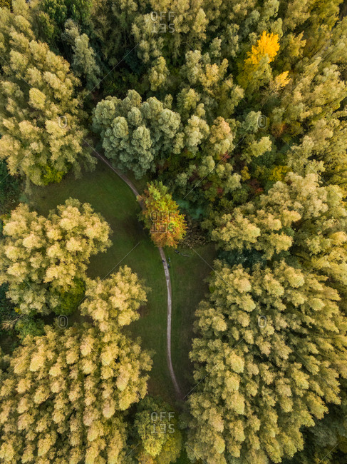 Aerial view above of pathway crossing forest, Deventer, Netherlands.
